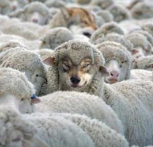 wolf-sheeps-clothing