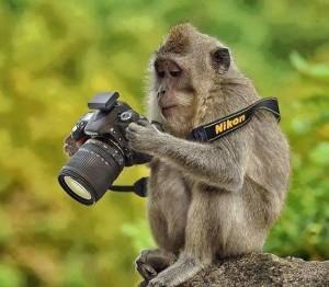 monkey camera